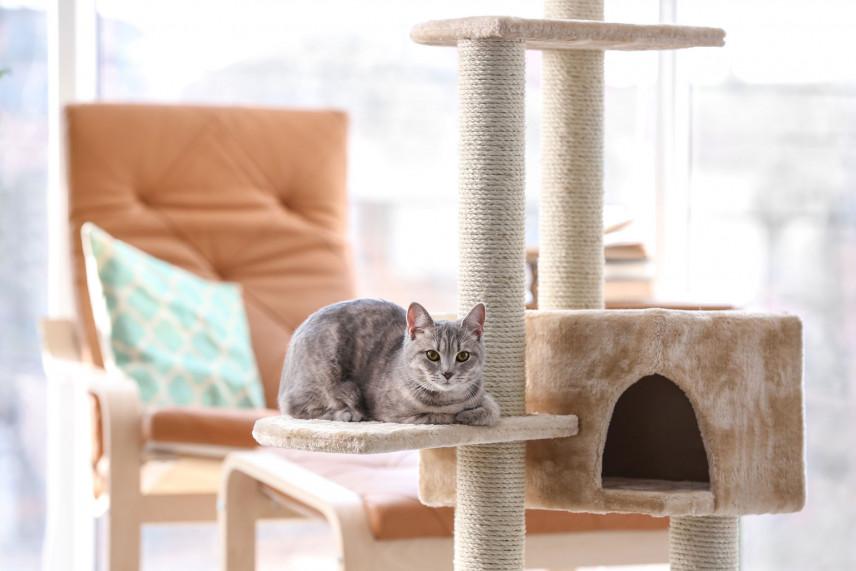 Jak zrobić drapak dla dużego, małego kota - zrób to sam