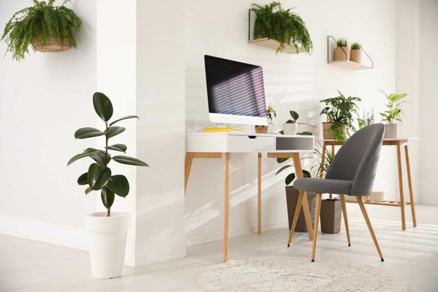 Kącik biurowy z roślinami.