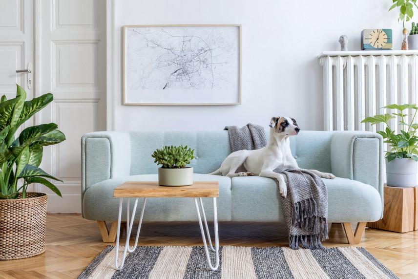 Mały salon z gustowną kanapą