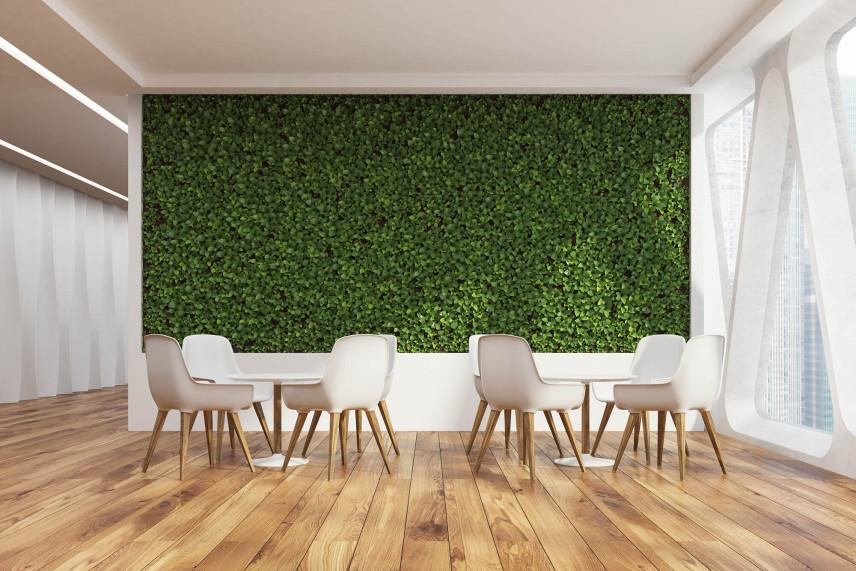Zielona, żywa ściana w biurze