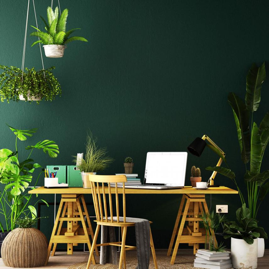 Ciemna zieleń w biurze