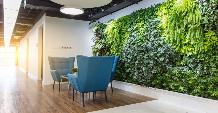 Żywe rośliny na ścianie