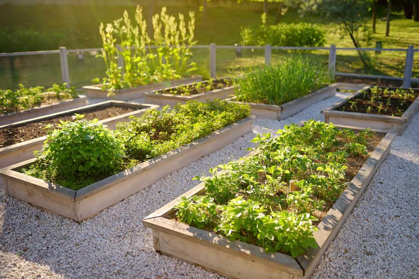 Rośliny w drewnianych skrzyniach