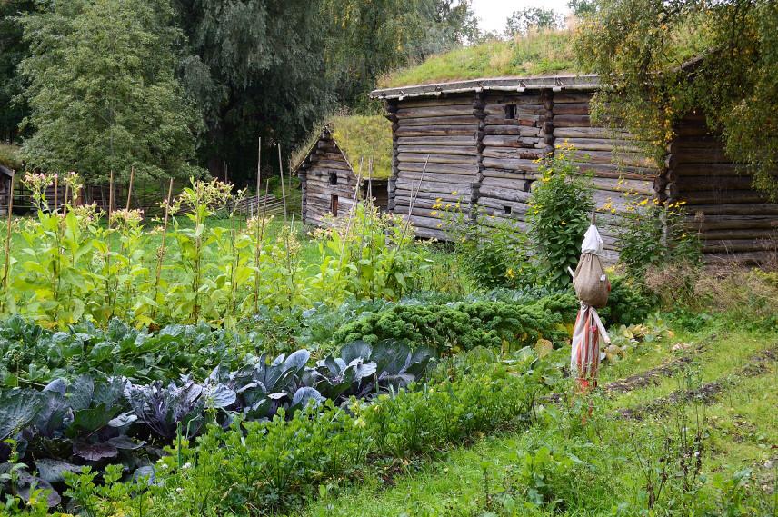Rustykalny ogród warzywny