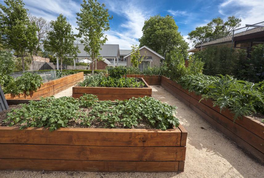 Ogród warzywny skrzynkowy