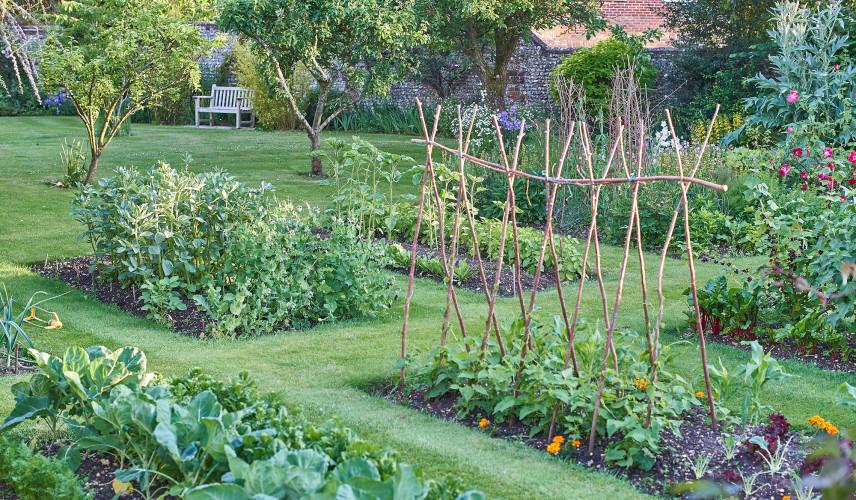 Ogród warzywny z wydzielonymi grządkami
