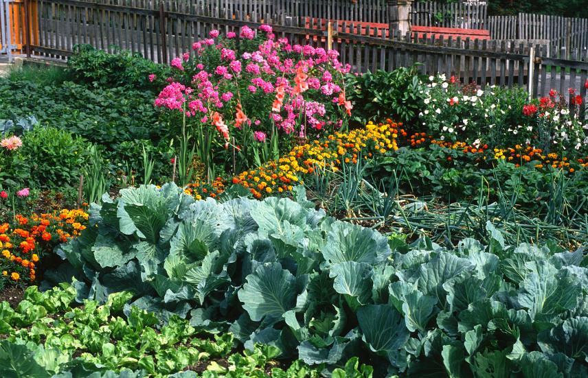 Wiejski ogród warzywny