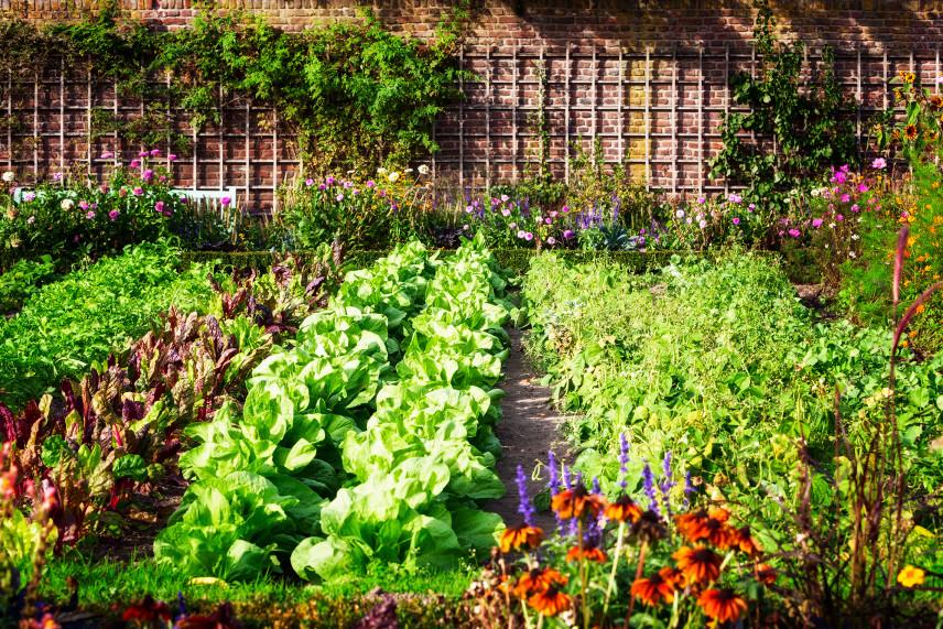 Duży ogród warzywny