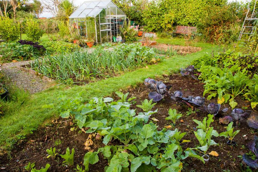 Duży ogród ze szklarnią