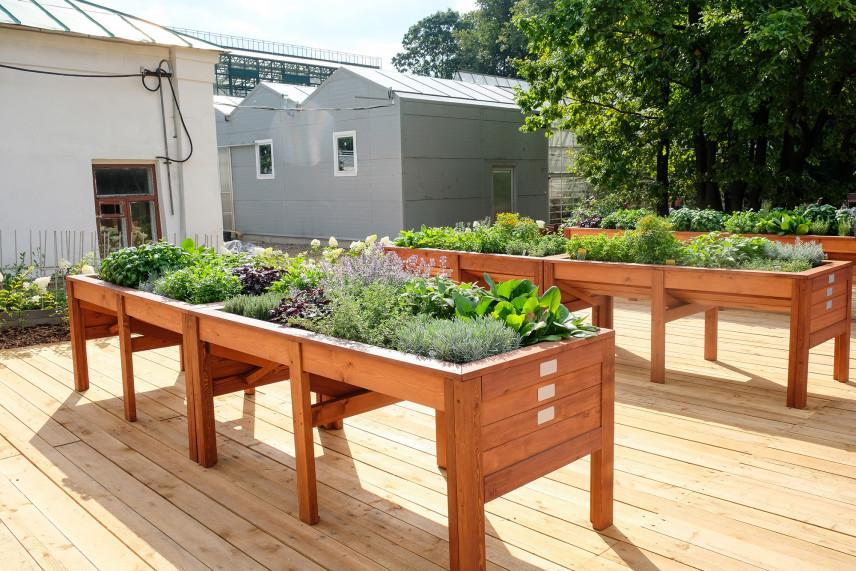 Skrzynkowy ogród ziołowy