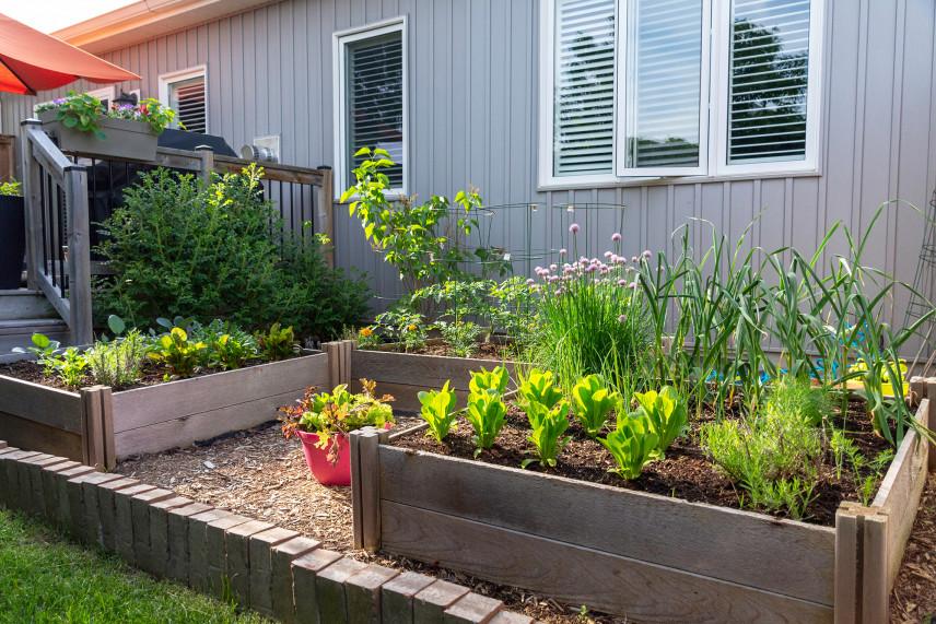 Mały ogród skrzynkowy